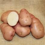 Early Rose Seed Potato