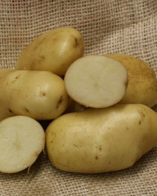 Ulster Chieftain Seed Potatoes