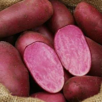 Heidi Red seed potatoes