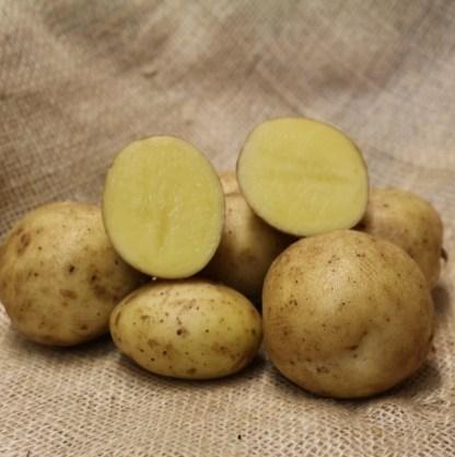 Kingsman Seed Potatoes