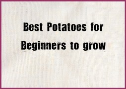 Best Potatoes for beginners to grow