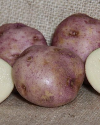 Fortyfold Seed Potatoes