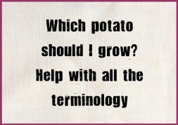 Which potato should I grow.  How do I know what to grow