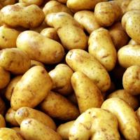 Ireland imported 72,000 tonnes of spuds