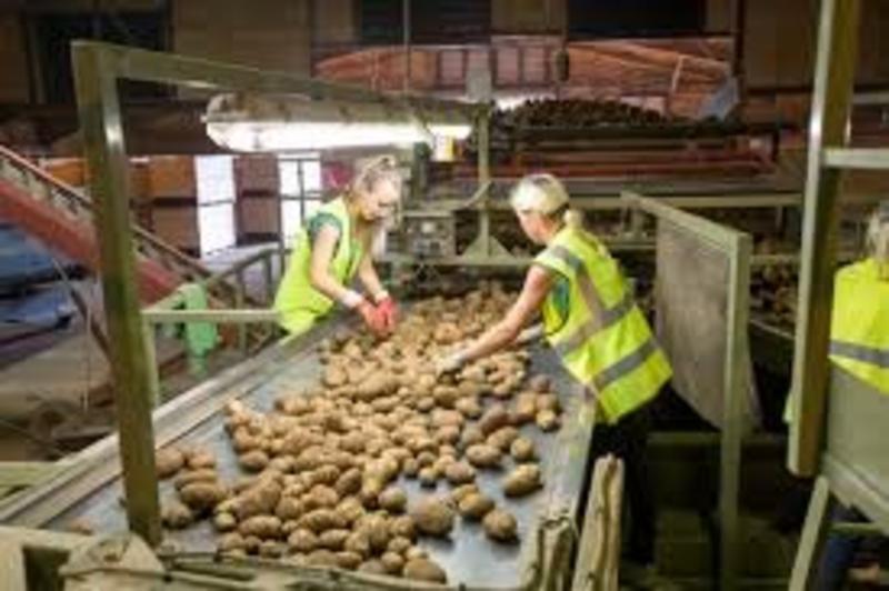 AHDB set to launch online marketing tool to help cut surplus potato stocks
