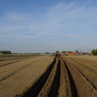 Belgium : Flemish potato growers foresee 10 mil Euro as support to cover part of their income losses for 'free (non contracted) potatoes'