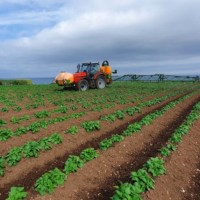Why you should plan early for successful potato late blight control