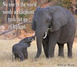 Conversations around #tweet4elephants