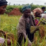 MasterCard Foundation launches US$ 50 million fund for rural farmers in Africa