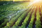 Irrigation As The New Solution To Food Shortages In Africa