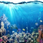 Environment: Five Reasons Why We Need To Protect Our Oceans At All Costs