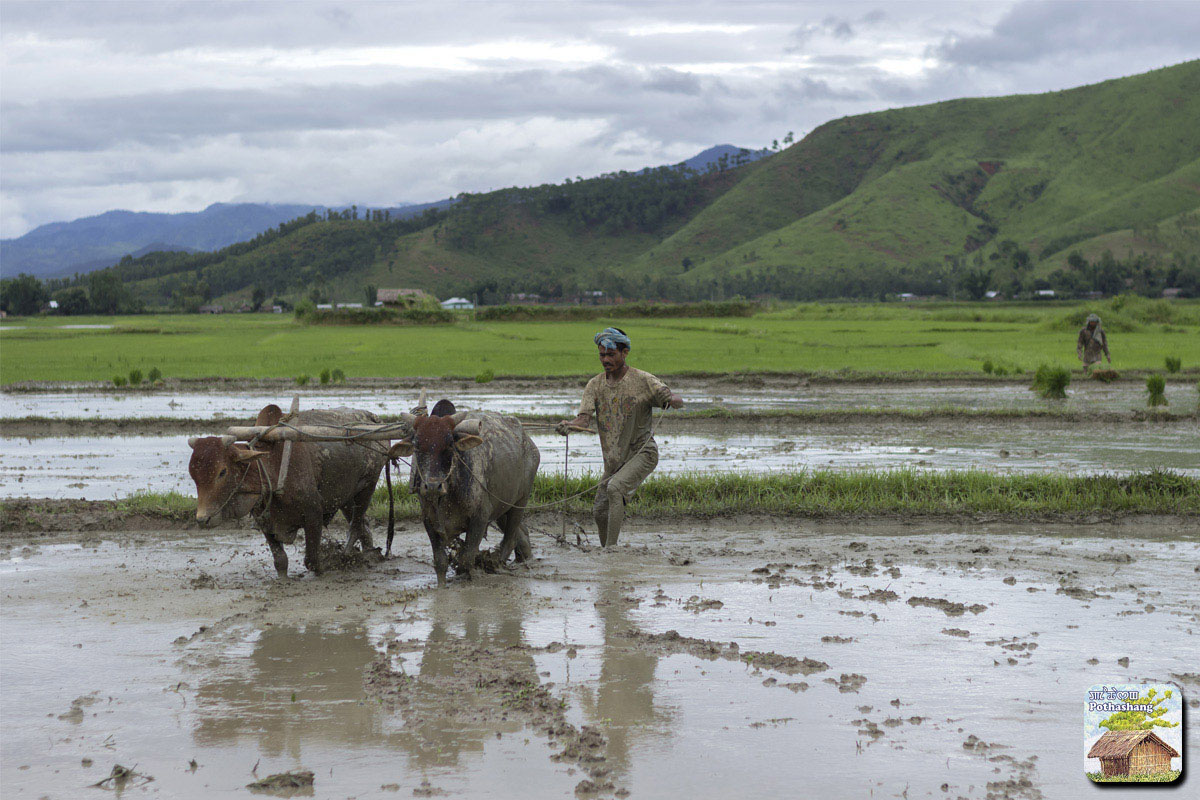 Ploughing near the base of a hill in Manipur