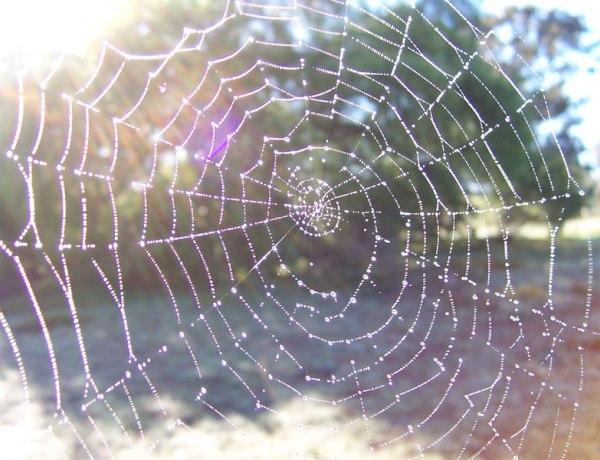 La Vidéo du Jour #13/02/13 : Une pluie d'araignées !