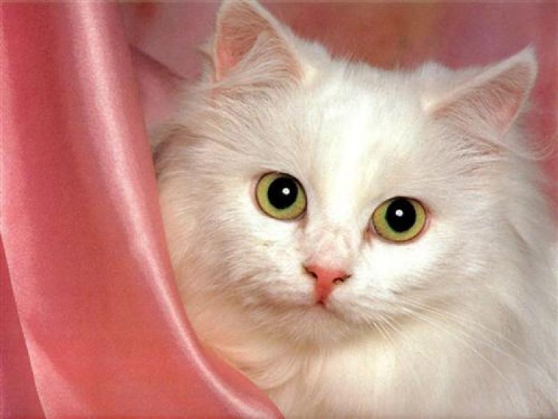 Un chat sauve la vie d'un bébé abandonné !