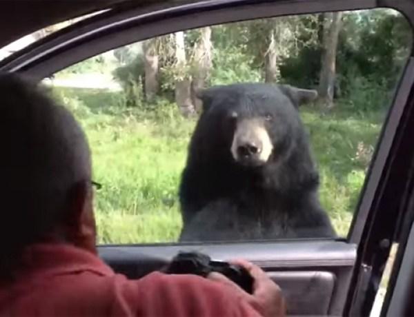 Il était une fois, un ours très curieux…