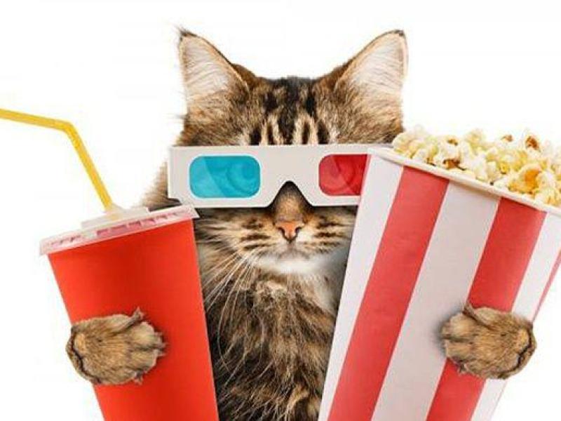Un chat pour reproduire des scènes mythiques du cinéma : Résultats hilarants !