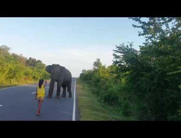 Quand une petite fille fait fuir un éléphant…
