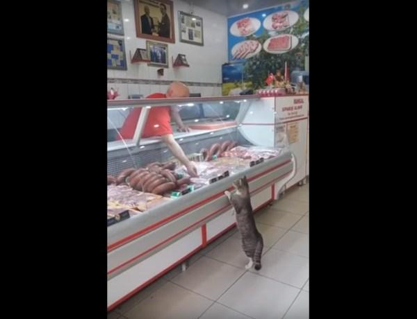 Trop mignon : Un chat devient un client régulier d'une boucherie