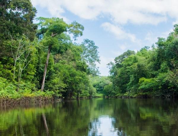 L'Amazonie fut peuplée par des millions de personnes dans le passé
