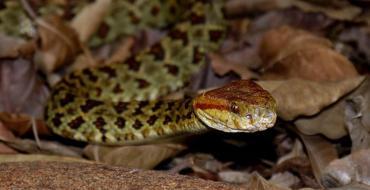 Inde : Mordue par un serpent, elle tue son bébé en l'allaitant