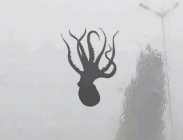 "<font color=""#be075e"" >Chine</font>  : Quand des créatures marines tombent du ciel"