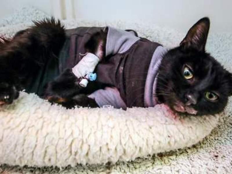 Belgique : Un homme place un chaton dans un four à 200 degrés et n'exprime aucun remords
