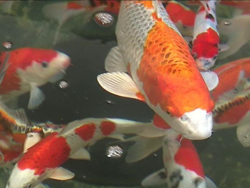 Un étrange poisson terrorise les internautes