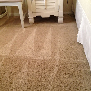 professional cleaners in action tulip carpet cleaning potomac