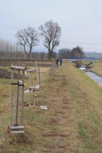 Ačkoliv alej švestek roste vedle potoku, sucho ji vzhledem k vysoké hrázy (a dalším faktorům) neminulo.