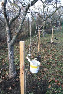 Nové ovocné stromy nahradí za pár let ty vzrostlé, které kvůli špatné péči brzy zestárnou.