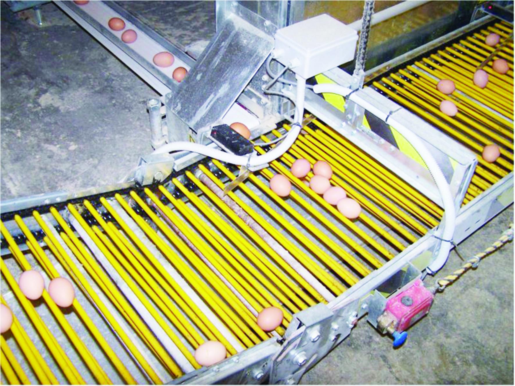 Menilik Penggunaan Robot dalam Industri Perunggasan