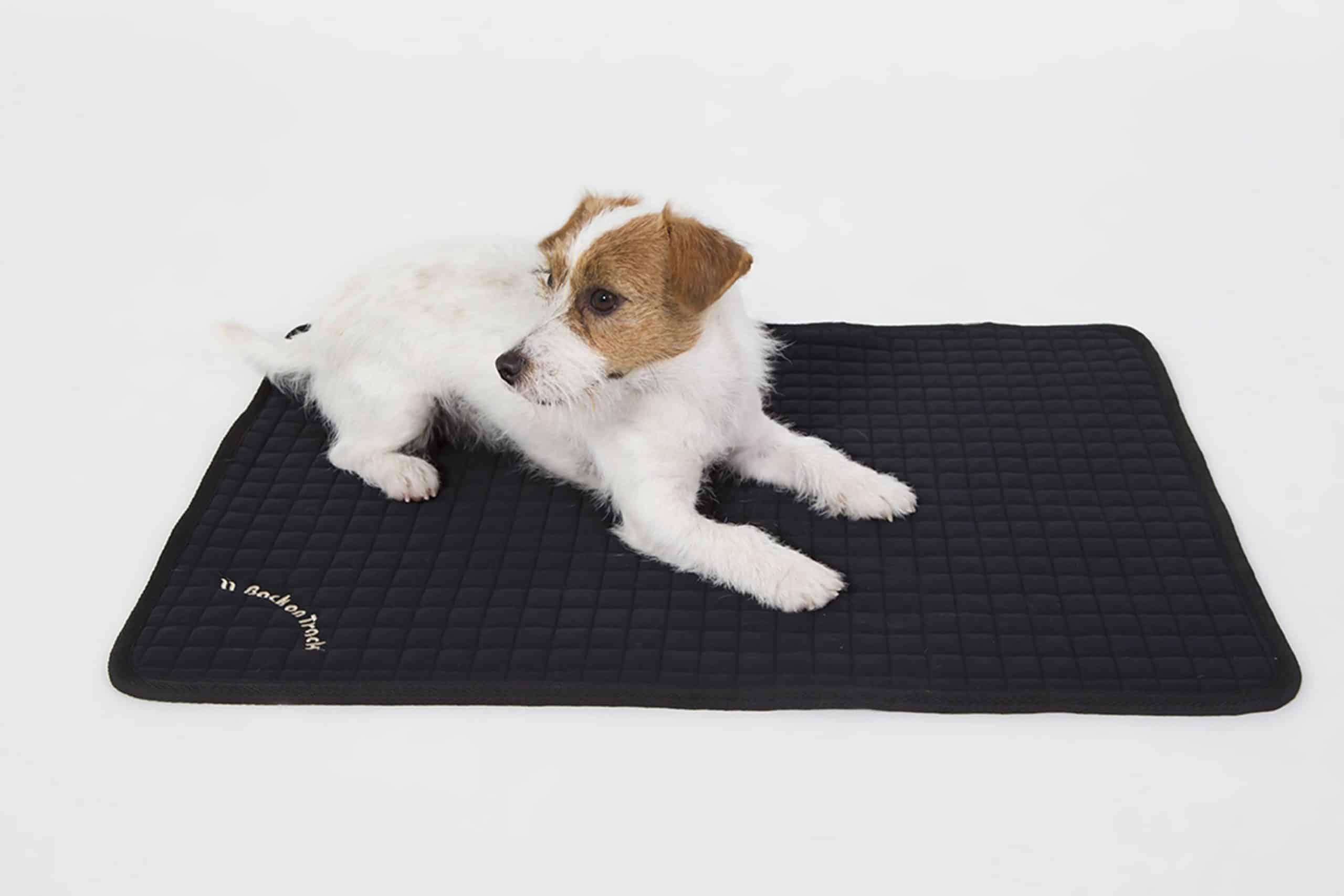 acheter un tapis pour chien solide et