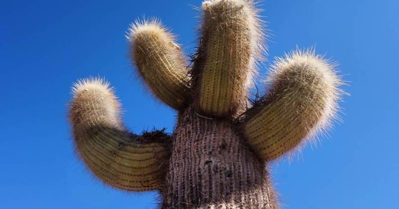 Passion cactus 1