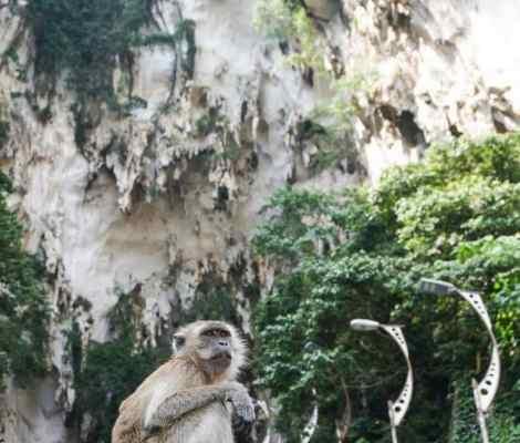 L'un des gardiens des batu caves à côté de Kuala Lumpur. 1