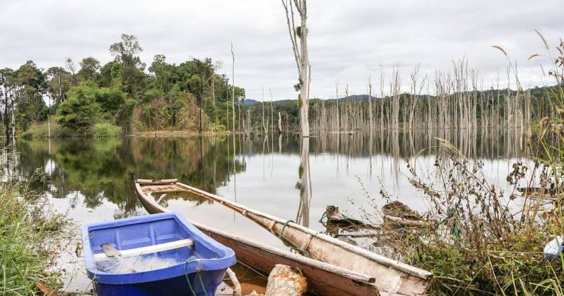 Forêt submergée 1