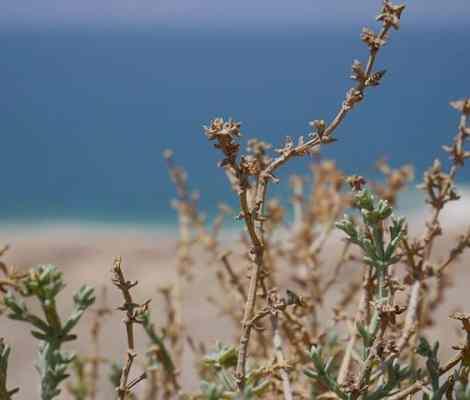 La mer morte ne l'est pas tant que ça. #deadsea #mermorte #jordanie #travel #voyage #instaphoto #instashot 11