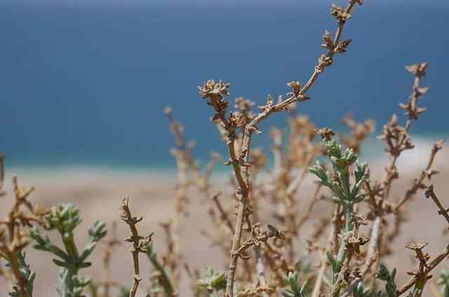 La mer morte ne l'est pas tant que ça. #deadsea #mermorte #jordanie #travel #voyage #instaphoto #instashot 1