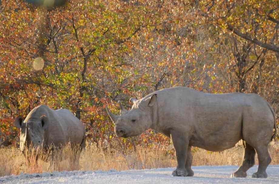 Safari au parc national d'Etosha en Namibie 19