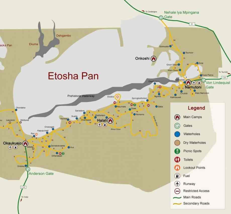 Safari au parc national d'Etosha en Namibie 7