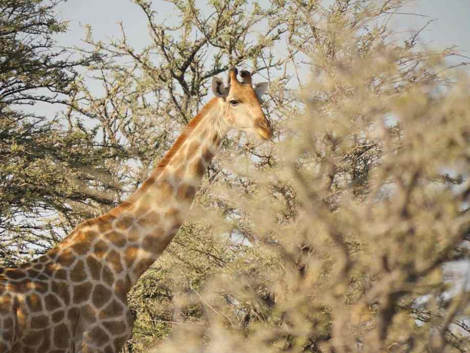 Safari au parc national d'Etosha en Namibie 17