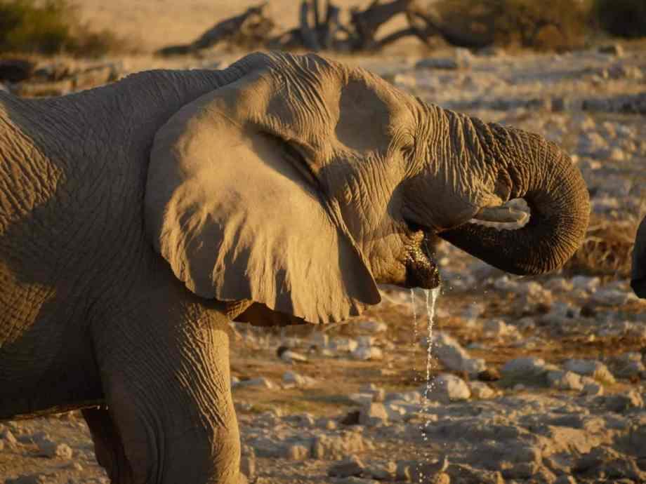 Tourisme en Namibie : les 6 incontournables de notre road trip 6