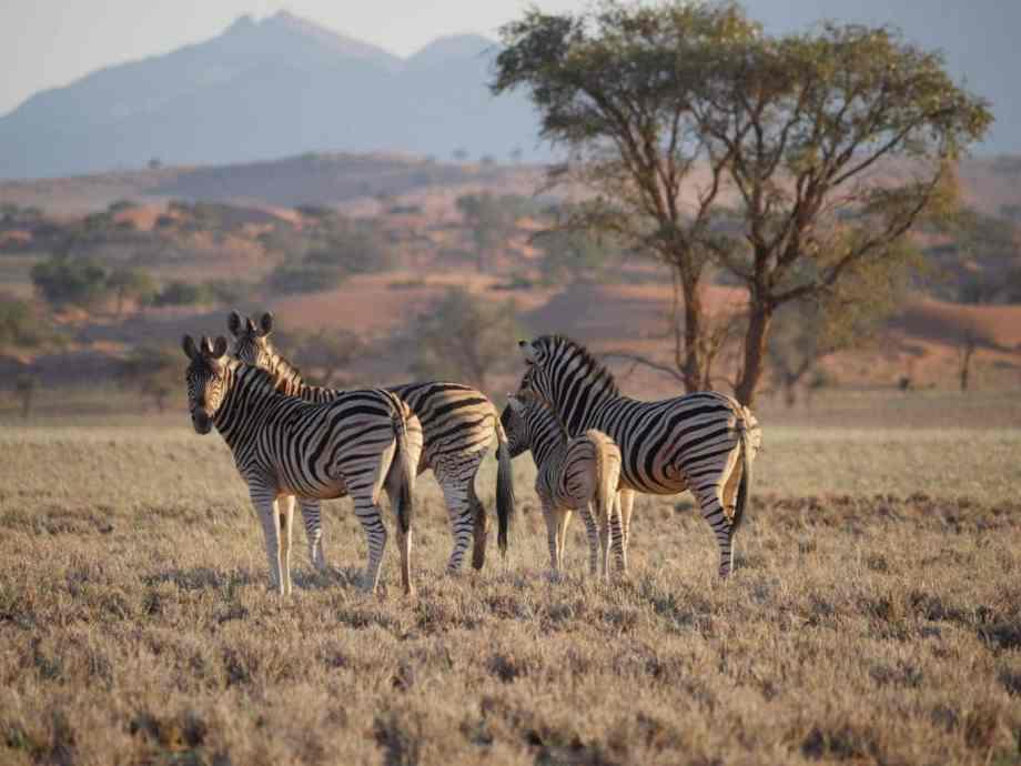 Tourisme en Namibie : les 6 incontournables de notre road trip 3