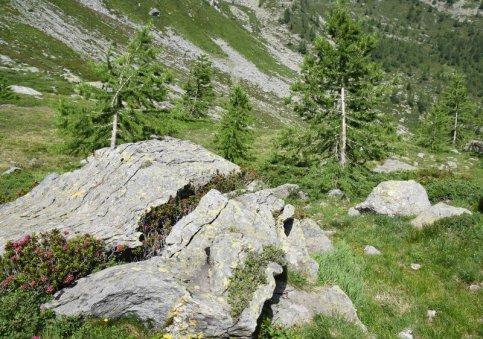 fleurs dans fisssure de la pierre