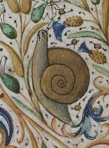 escargot enluminure