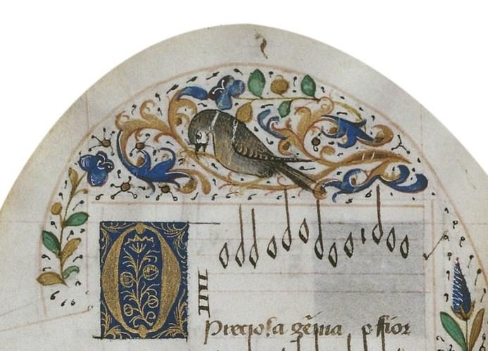oiseaux notes enluminure