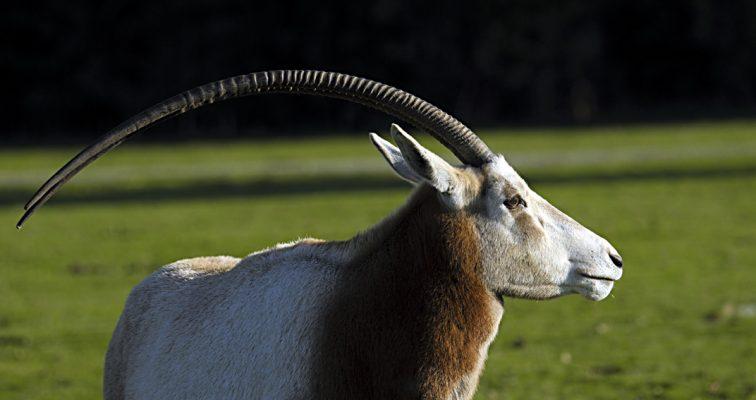 Animalier - Bakary Diakhité