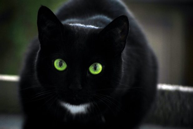 25 The Most Beautiful Black Cats