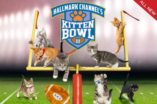 10-Facts-You-Don't-Know-about-Puppy-Bowl-23 Top 10 Facts You Don't Know about Puppy Bowl