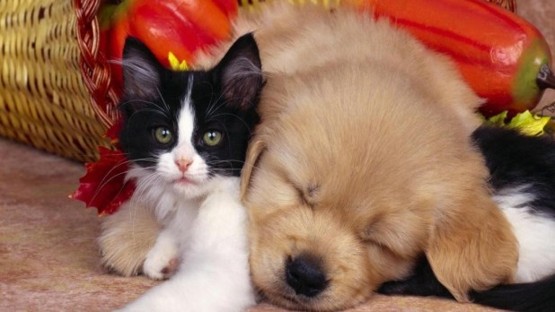 The-Main-Health-Guide-to-Take-Care-of-Your-Pets-71 The Main Health Guide to Take Care of Your Pets