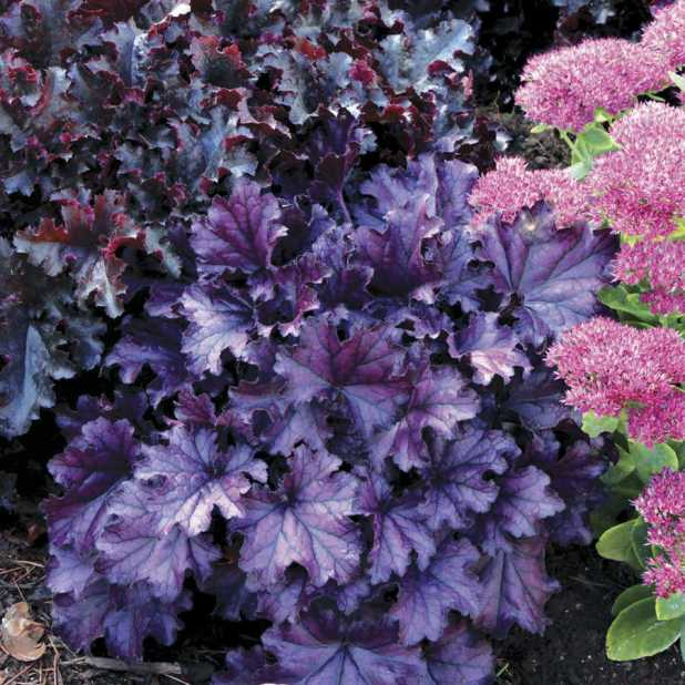 36329 Top 10 Flowers That Bloom all Year